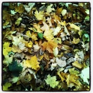 Herbstlaub ist toll zum Toben
