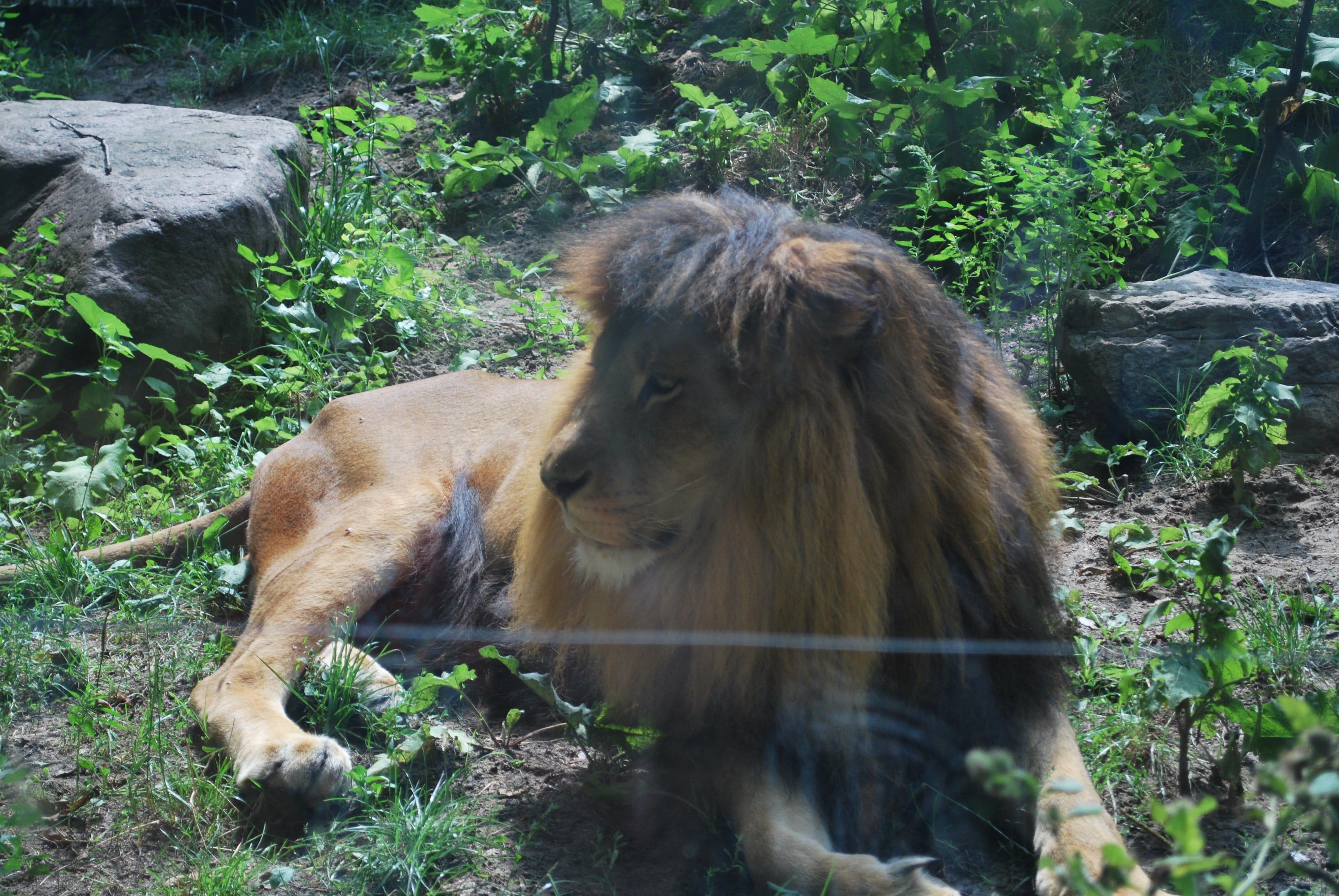 Tierpark Eberswalde Brandenburg löwe