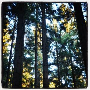 Wandern im Thüringer Wald