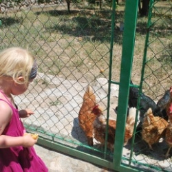 Mallorca Urlaub auf dem Bauernhof Hühner füttern