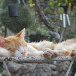 Mallorca Urlaub auf dem Bauernhof Katze