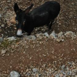Mallorca Urlaub auf dem Bauernhof Esel
