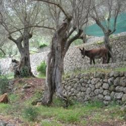 Tourismus rural Mallorca