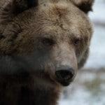 Wochenendausflug ins Berliner Umland: Der Wildpark Johannismühle