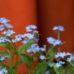 Felix Neumann - Blumen