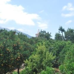 Orangen im Tal von Sóller