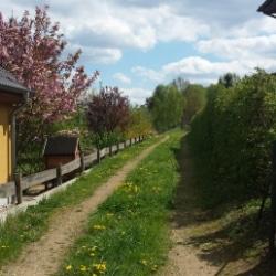 auf dem Weg nach Moritzburg