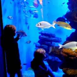 Palma Aquarium 55 Becken
