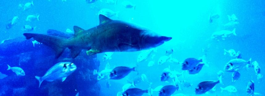 Palma Aquarium auf Mallorca Haie