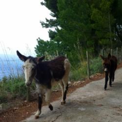 Wandern auf Mallorca mit Kindern S'Estaca Esel