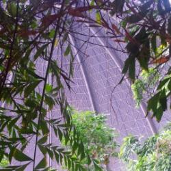 Regenwaldpfad in Tropical Islands