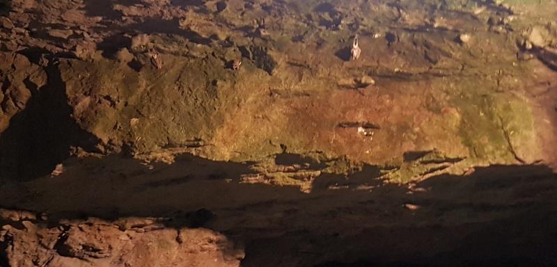 Fledermäuse im V3 Bunker / Forteresse de Mimoyecques in Frankreich