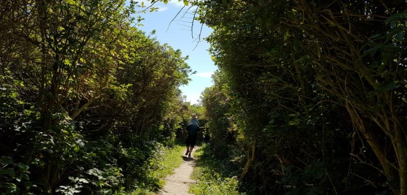 Rundweg im Naturschutzgebiet Platier Oye Plage