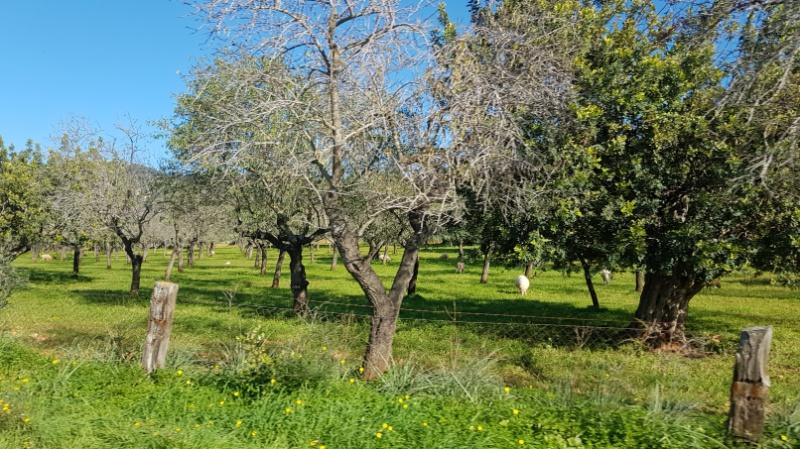 Mallorcaurlaub mit Kindern Ausflugstipps