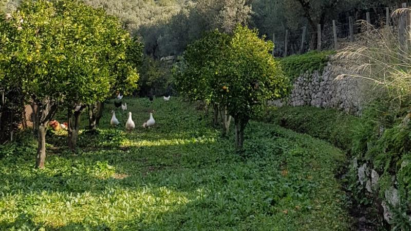 Bauernhofurlaub mit Kindern auf Mallorca