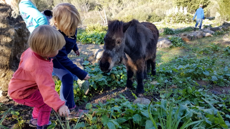 Agroturismus und Finca Urlaub mit Kindern auf Mallorca