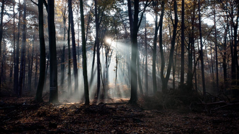Ein ehemaliges Waldkitakind geht zur Schule: ein erster Ein- und Rückblick und Besuch des Dialogforum der Deutschen Wildtier Stiftung