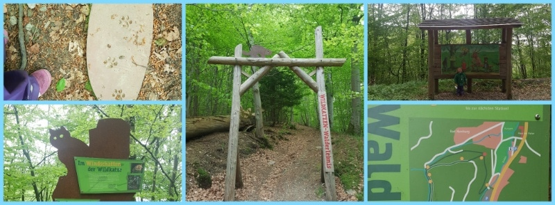 Wildkarten Lehrpfad, Harz, Nationalpark, Wohnmobilurlaub mit Kindern, Reisen in deutschland, wandern, Natur, Wald, Wildtiere