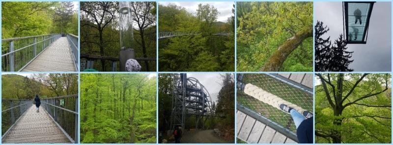 Wohnmobilurlaub mit Kindern, Urlaub im Harz, Baumwipfelpfad, Bad Harzburg, Niedersachsen, Nationalpark Harz