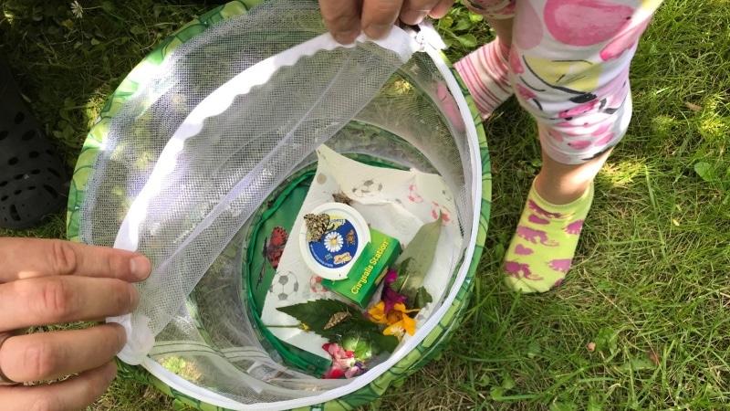 Schmetterlingsgarten, Schmetterling, Kinder, Raupen, Insekten, Garten