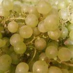 Unsere Ernte und was wir daraus machen: Weintraubensaft, Nashi-Birnen-Chutney und Nashi-Birnen-Kuchen