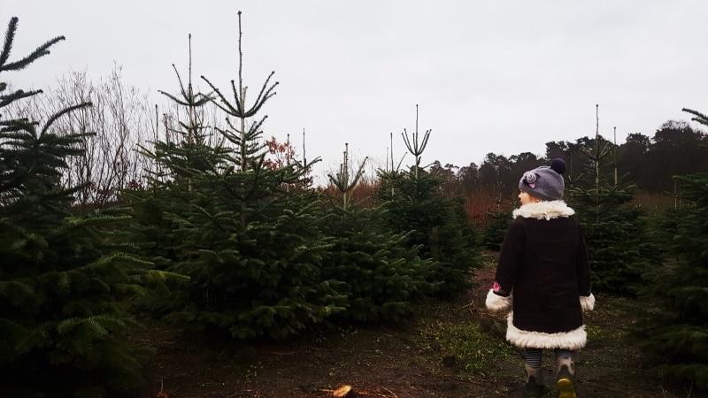 Weihachtsbaum, Adventszeit, weihnachtszeit, Weihnachten, Nordmanntanne, Krämerwaldhof