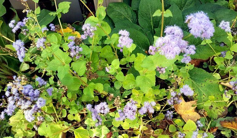 Insektensterben, Natur, Umwelt, Umweltschutz, Insektenhabitat, Blumenwiese, Kräuterwiese, naturschutz, Corwdfunding Kampagne, Naturfelder.de