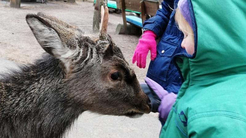 Tierpark Germendorf Brandenburg Damwild Streichelzoo Freigehege